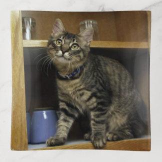 Kimber Kitty Trinket Tray トリンケットトレー