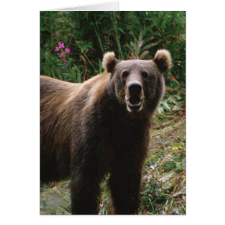 Kodiakのヒグマ カード
