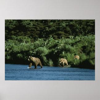 Kodiakのヒグマ ポスター