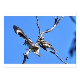 KOOKABURRAの田園クイーンズランドオーストラリア ポストカード