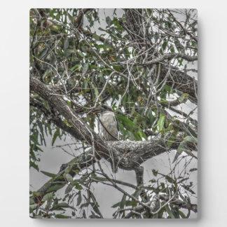 KOOKABURRA及びヘビ田園クイーンズランドオーストラリア フォトプラーク