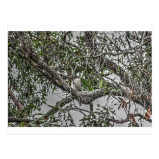 KOOKABURRA及びヘビ田園クイーンズランドオーストラリア ポストカード