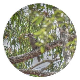 KOOKABURRA田園オーストラリアの芸術の効果 プレート
