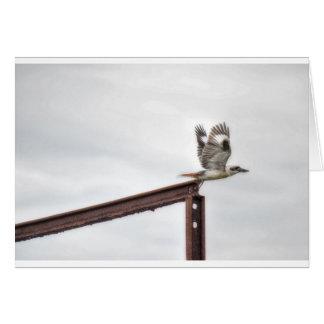 KOOKABURRA飛行中にクイーンズランドオーストラリア カード