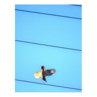 KOOKABURRA飛行中に田園クイーンズランドオーストラリア ポストカード