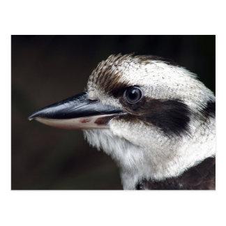 Kookaburra ポストカード