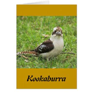 Kookabuura カード
