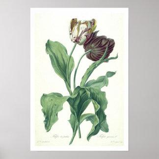 L刻まれる「オペラBotanica」からの庭のチューリップ、 ポスター