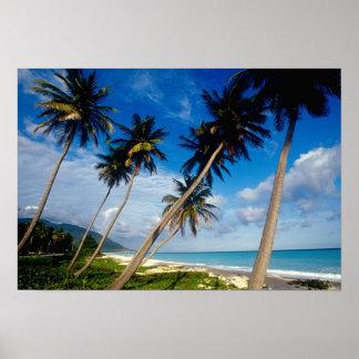 LaのSamana半島、ドミニカ共和国、 ポスター