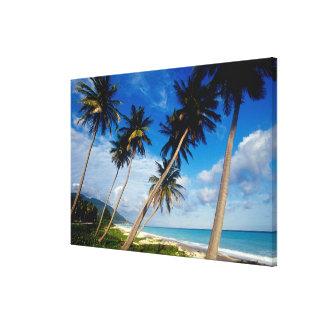LaのSamana半島、ドミニカ共和国、2 キャンバスプリント