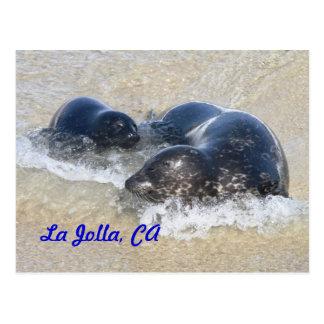 La Jollaの子どものアシカ ポストカード
