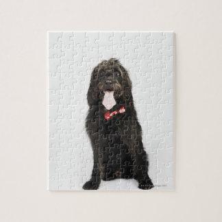 Labradoodle犬のポートレート ジグソーパズル