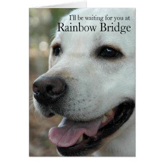 Labrador Retriever sympathy card2 カード