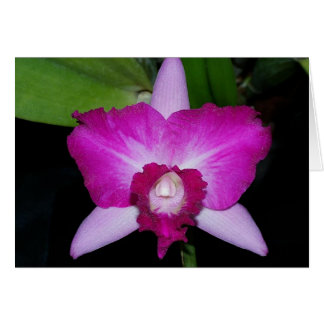 Laeliocattleyaの蘭の雑種 カード