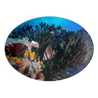 Laja Ampat水中4 磁器大皿