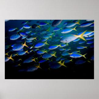 Laja Ampat水中5 ポスター