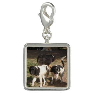 Landseer Newfyの子犬のチャーム チャーム