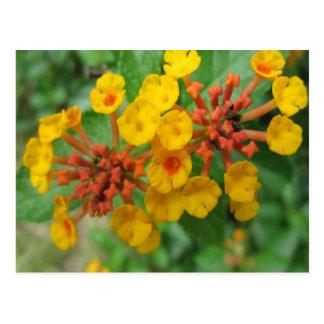 Lantanaの庭の花の黄色 ポストカード
