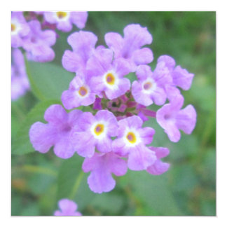 Lantanaの植物の紫色の花柄 カード