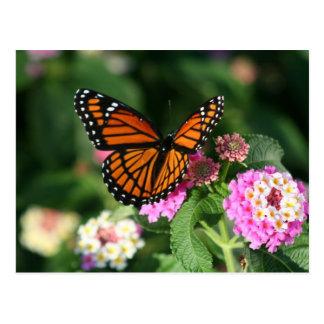 Lantanaの花のマダラチョウ ポストカード