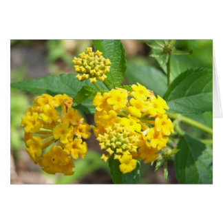 Lantanaの花カード(中ブランク) カード