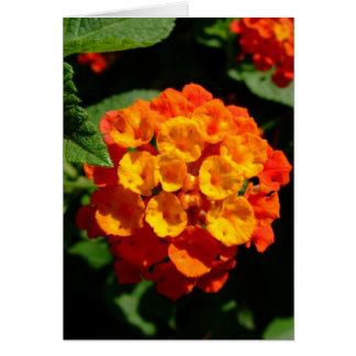 Lantanaの花 カード