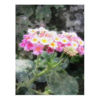 Lantana 2の水彩画 ポストカード