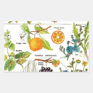 Larousseのフルーツのオレンジナシのブドウの絵画 長方形シール