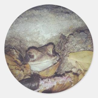 Le Toad Nighttimeの自然の写真撮影 ラウンドシール