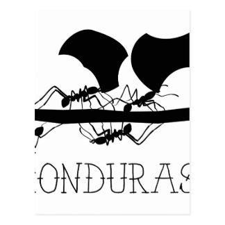 Leafcutterの蟻ホンジュラス ポストカード