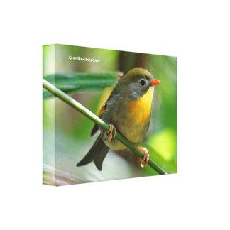 Leiothrix/Pekinカラフルなロビンの鳴き鳥 キャンバスプリント