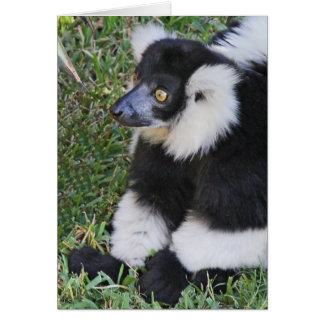Lemurの見物人 カード
