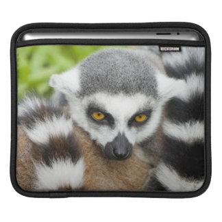 LemurのStripeyのかわいい尾 iPadスリーブ