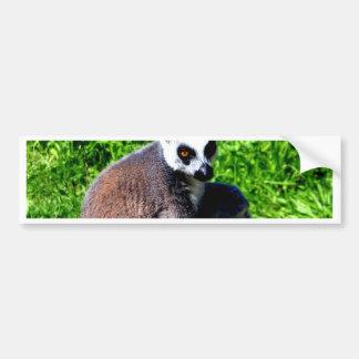 lemur猿の平和はリラックスし、 バンパーステッカー