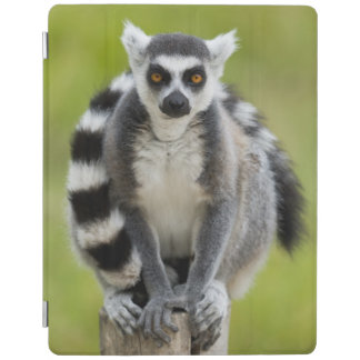 Lemur iPadスマートカバー