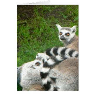 Lemurs カード