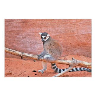 Lemurs ポスター