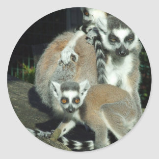 Lemurs ラウンドシール