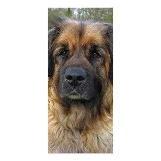 Leonberger犬の美しい写真のカスタムのしおり ラックカード