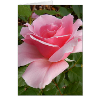 Les Sjulin Pink Rose Photo Note Cards カード