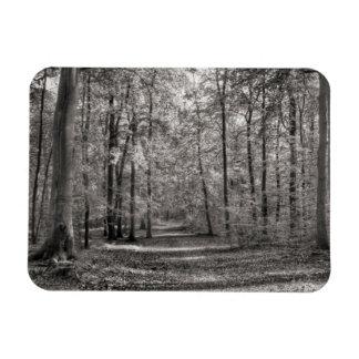Liepnitzseeの森林 マグネット