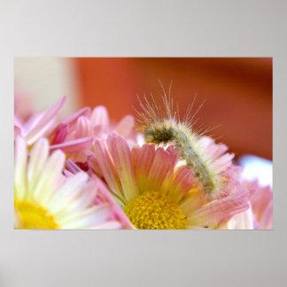 Lilの幼虫 ポスター