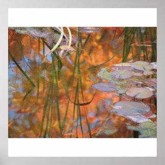 Lillyの池の反射 ポスター