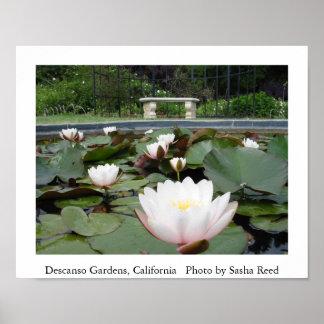 Lillyの池 ポスター