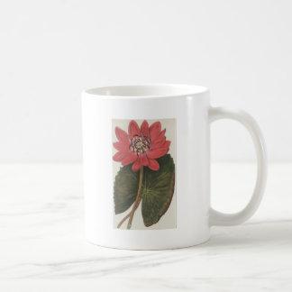 lilly水スイレン属Rubea コーヒーマグカップ