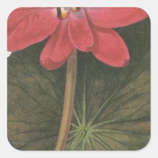 lilly水スイレン属Rubea スクエアシール
