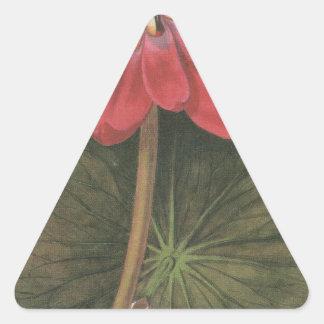 lilly水スイレン属Rubea 三角形シール