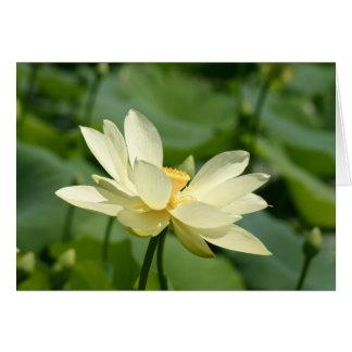 lilly水花 グリーティングカード