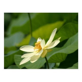 lilly水花 ポストカード