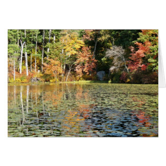 Lily Pad Cove - Whitney Pond カード